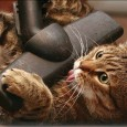 • «СЕТИ И БИЗНЕС» • №2 (63) 2012 • По статистике, более чем в 85% случаев проблемы в волоконно-оптических линиях связаны с загрязнением торцевой поверхности волокна. Такая цифра заставляет задуматься...